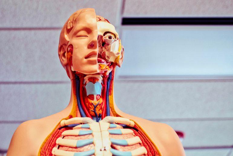 Nuorten transhoidot – lääketieteellinen skandaali?