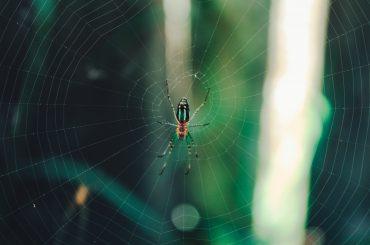 Hämähäkki ja sen verkko